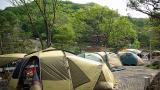 장흥 수목원 캠핑장 작은 사진