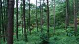 용인 자연휴양림 작은 사진
