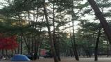 솔밭 캠프장 작은 사진