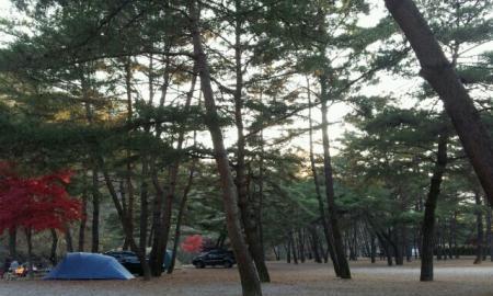 솔밭 캠프장 작은이미지