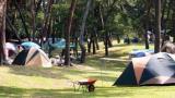 송림 오토캠핑장 작은 사진