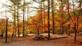 용화산 자연휴양림 야영장 작은 사진
